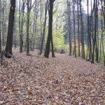 Bylo sice dost vlhko a mokro, ale poježdění v lese po koberci z listí bylo krásné.