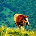 Na louce se pásl kůň. Jakou měl barvu?