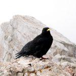 Pro ptáky není 2995 m. n. m. žádná výška.