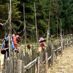 Umělecky postavený plot.