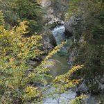 Nažloutlý podzim nad řekou Schwarza.