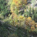 Pohled do údolí prokvetlého podzimem.
