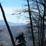 Výhled zarostlým hřebenem na zasněžené Tatry.