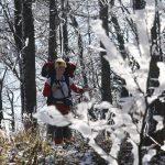 Na Chládkové byl zamrzlý les jak vystřižený z Mrazíka.