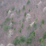 Jarem zatím nedotčené listnaté lesy.