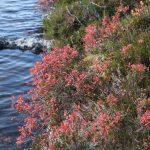 Severský podzim měl nádherné barvy.