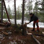I tady byla připravená spousta borového dřeva, stačilo ho jen nařezat a naštípat.