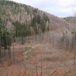 Dlouhé pásy asfaltek a lesních cest vzhůru údolími.