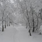 Cesta mezi pohádkově zasněženými stromy.