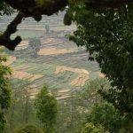 Malebná políčka s obilím a kukuřicí v jinak vyschlé krajině.