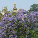 Swayambhunath neboli opičí chrám. Posvátné místo budhismu i hinduismu.