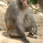 Opice byly krotké a za pamlsky ochotně pózovaly.