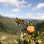 Je pozdní léto, na keřích jsou zralé plody.