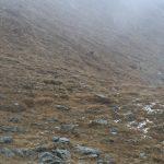 Z hustého deště se vylouplo stádo kamzíků.