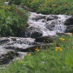 Cesta stoupá nahoru podél potoka.