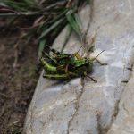 Kobylek a dalšího hmyzu tu byla mračna.