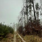 Příjemná cesta lesem.