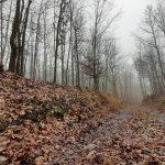 Opuštěné listnaté lesy.