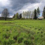 Přírodní rezervace Meandry Svratky u Milov.