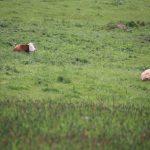 Pastviny.