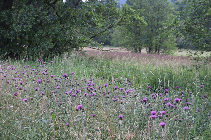 Krásná přírodní rezervace Meandry Svratky u Milov.