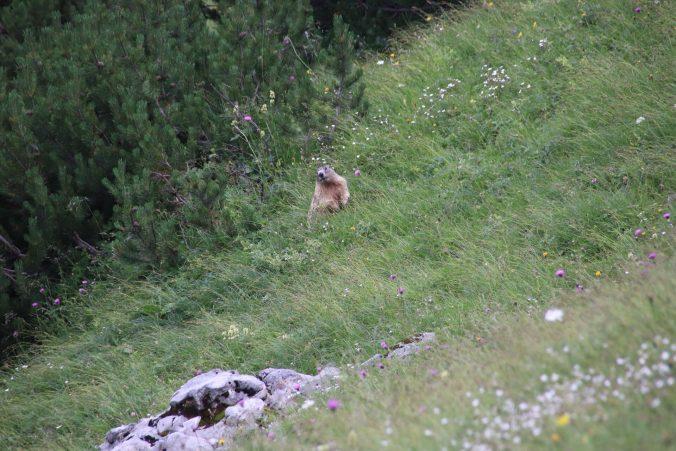 Cestou jsme zahlédli horské sviště.