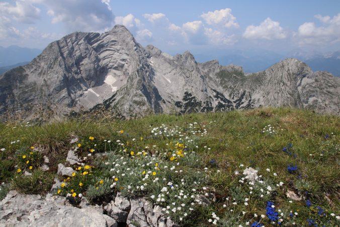 Rozkvetlá louka na vrcholu Hochzinödlu s Hochtorem a Platspitzí.