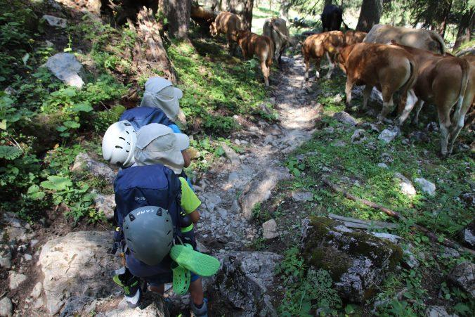 Krávy nám dokonce na chvíli zahradily cestu.
